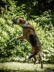 Tierfotografie: Bleibende Erinnerungen 3