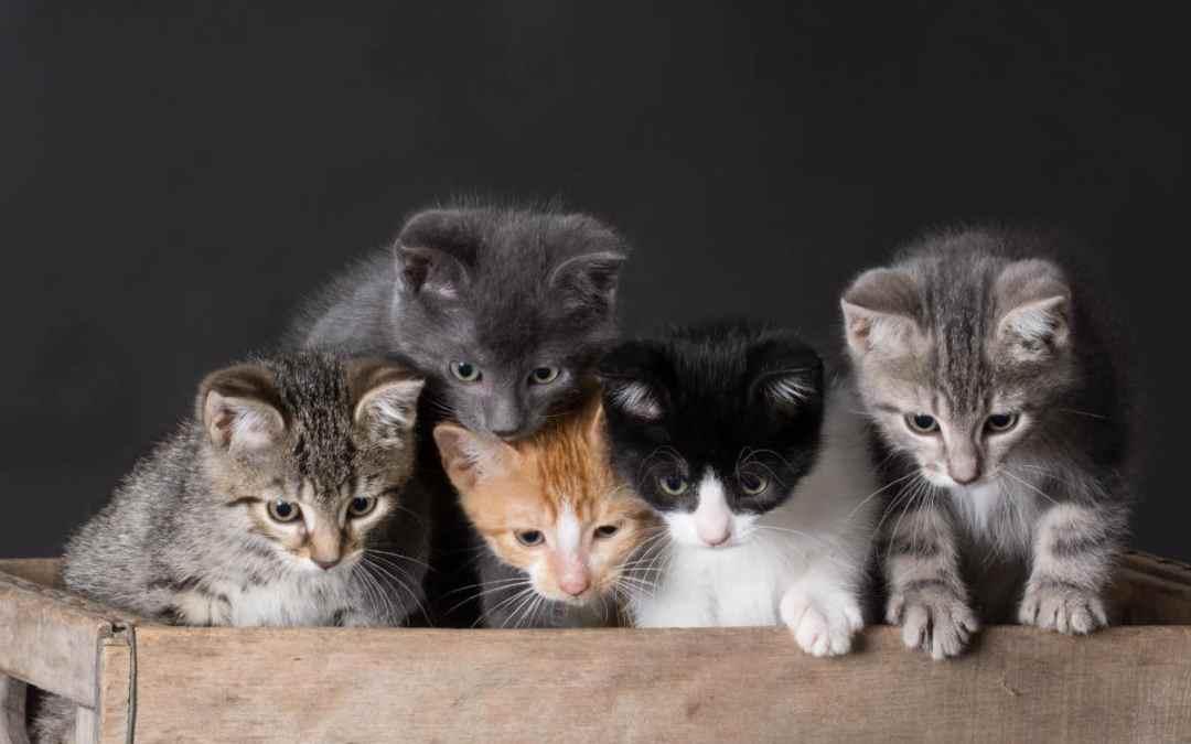 Die beliebtesten Katzenrassen
