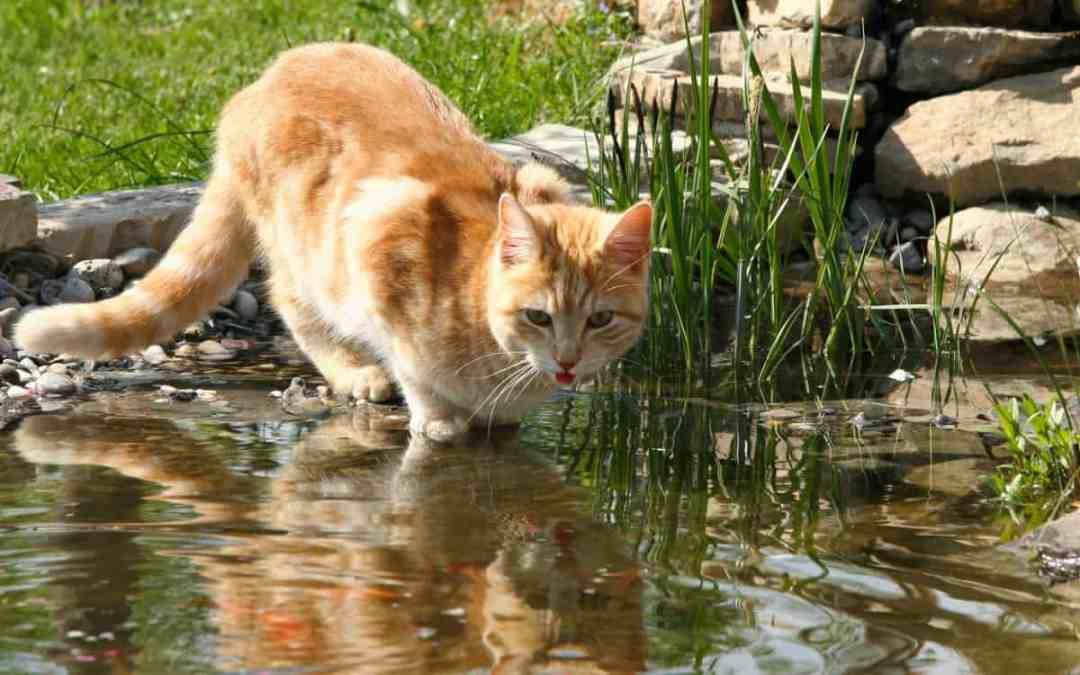 Katze zugelaufen – was tun?