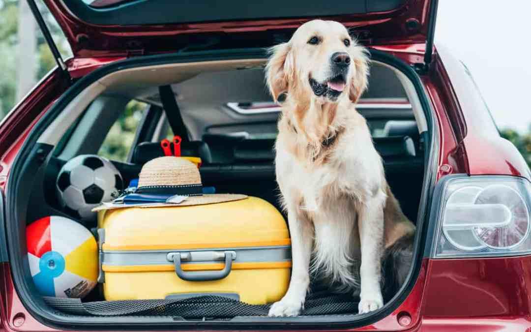 Urlaub mit Hund: Reisen mit dem Auto