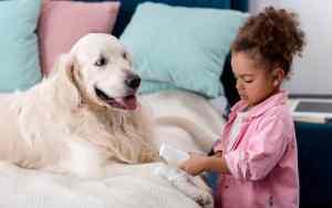 Erste Hilfe beim Hund