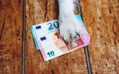Praktische Steuertipps für Hundehalter