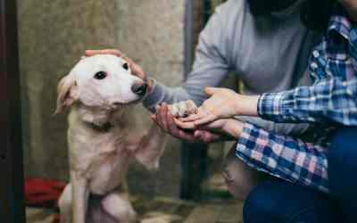 Hunde aus dem Tierschutz aufnehmen