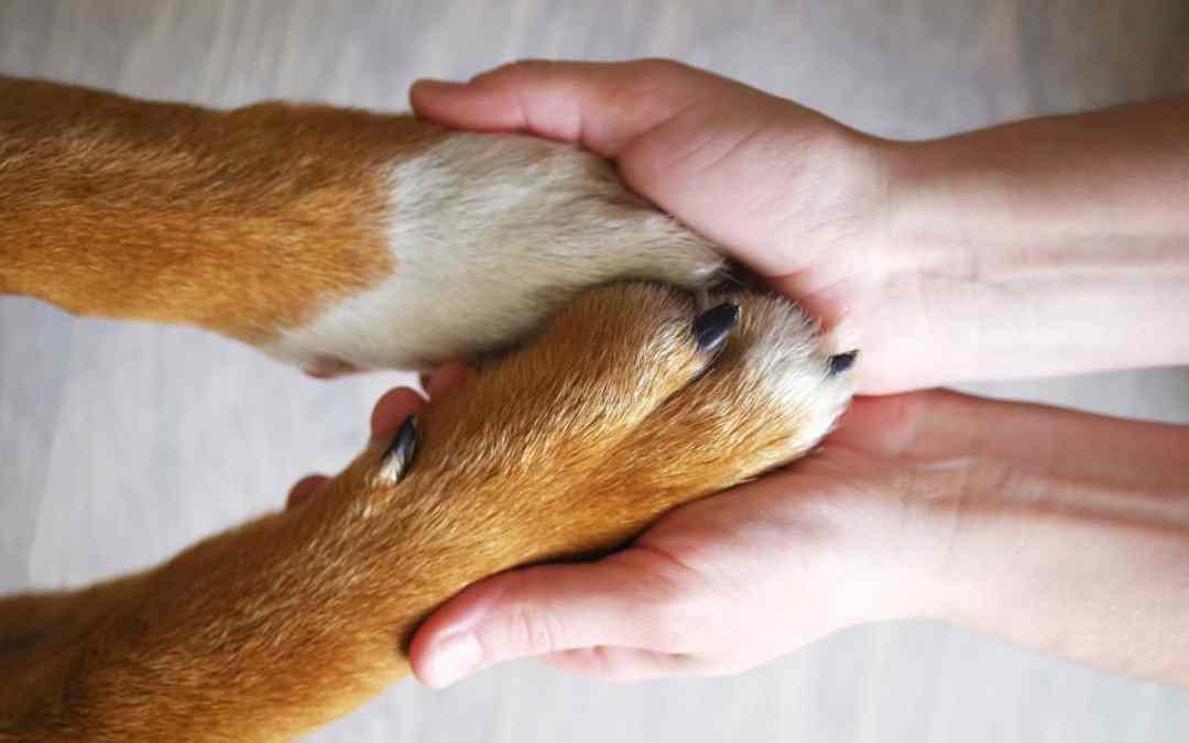 Fünf Irrtümer über Tierheimtiere
