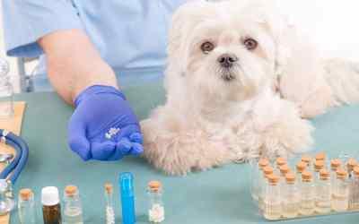 Homöopathie für Haustiere: sinnvoll?