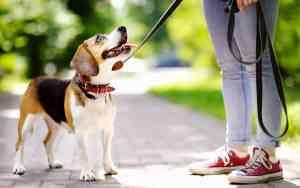 Der Sachkundenachweis für Hunde