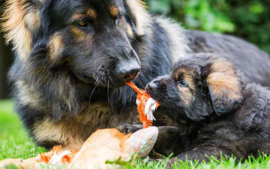 Die Entwicklungsphasen des Hundes
