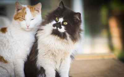 Katzenhaltung: allein oder zu zweit?