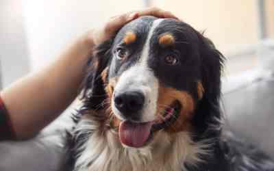 Wie wirken Bachblüten für Hunde?