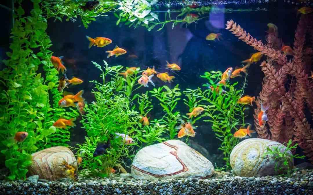 Fischhaltung: Aquarium für Anfänger
