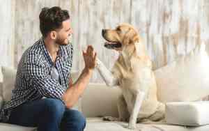 Wie geht gute Hundevermittlung?