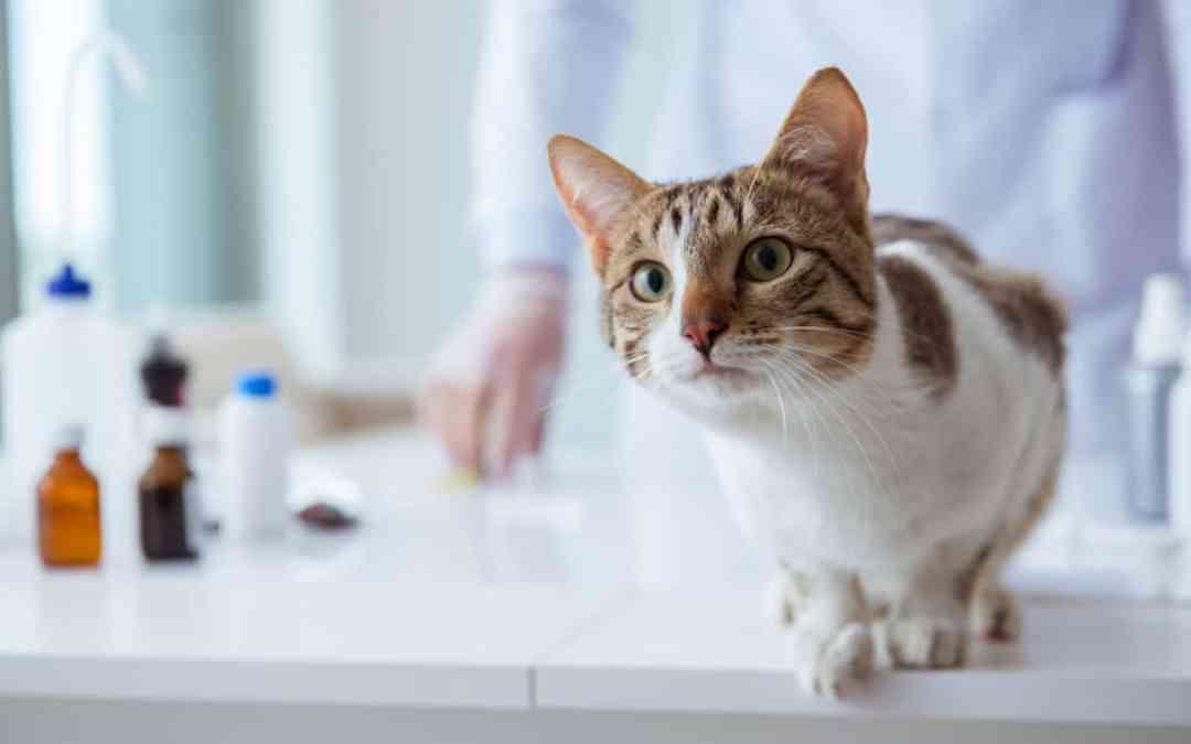 Coronavirus: Eine Gefahr für Katzen?
