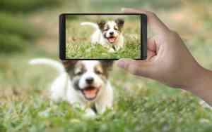 Gute Hundefotografie mit Smartphone