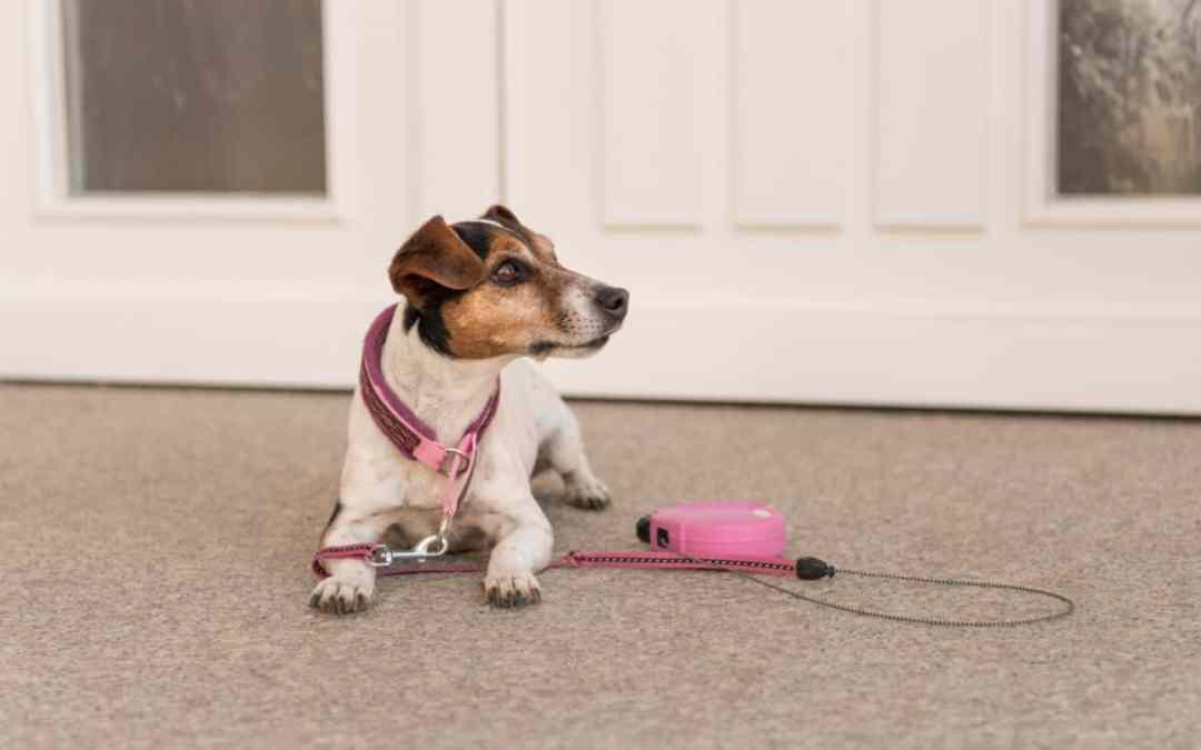 Wer darf mit meinem Hund zum Gassi?
