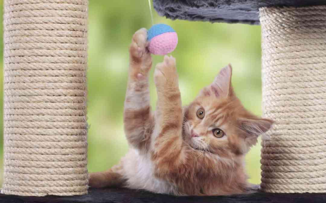 Brauchen Katzen einen Kratzbaum?