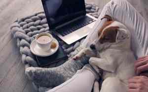 Hundebetreuung während Kurzarbeit