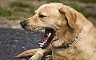 Beschwichtigungssignale des Hundes