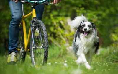 8 Tipps fürs Fahrradfahren mit Hund