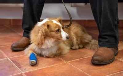 5 Tipps: Tierarztbesuch mit dem Hund