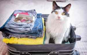 Wohin mit der Katze im Urlaub?