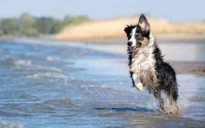 So planst du deinen Urlaub mit Hund