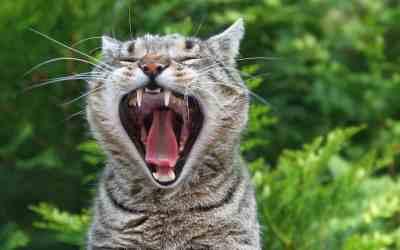 Wenn die Katze Mundgeruch hat