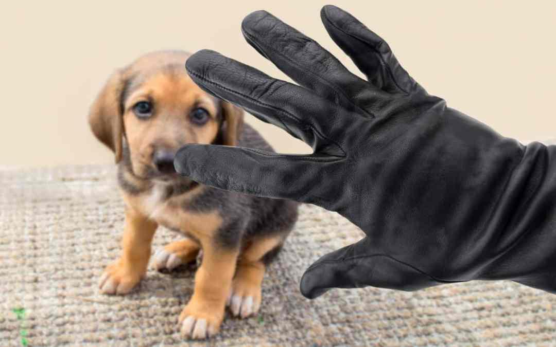 Der Hund wurde gestohlen – was tun?