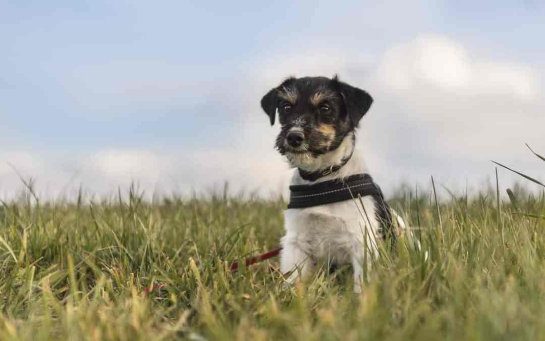 Mantrailing: pfiffiges Hundetraining