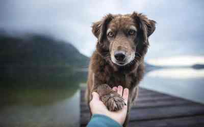 Die neue Hundeverordnung kommt
