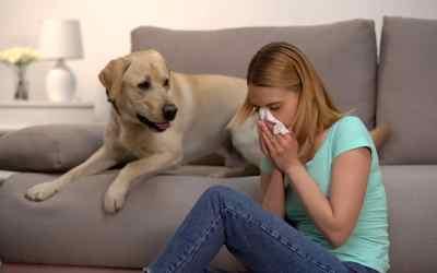 Hundehaarallergie: Hund abgeben?