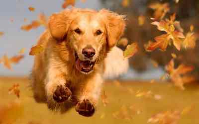 Hurra, der Herbst ist da!
