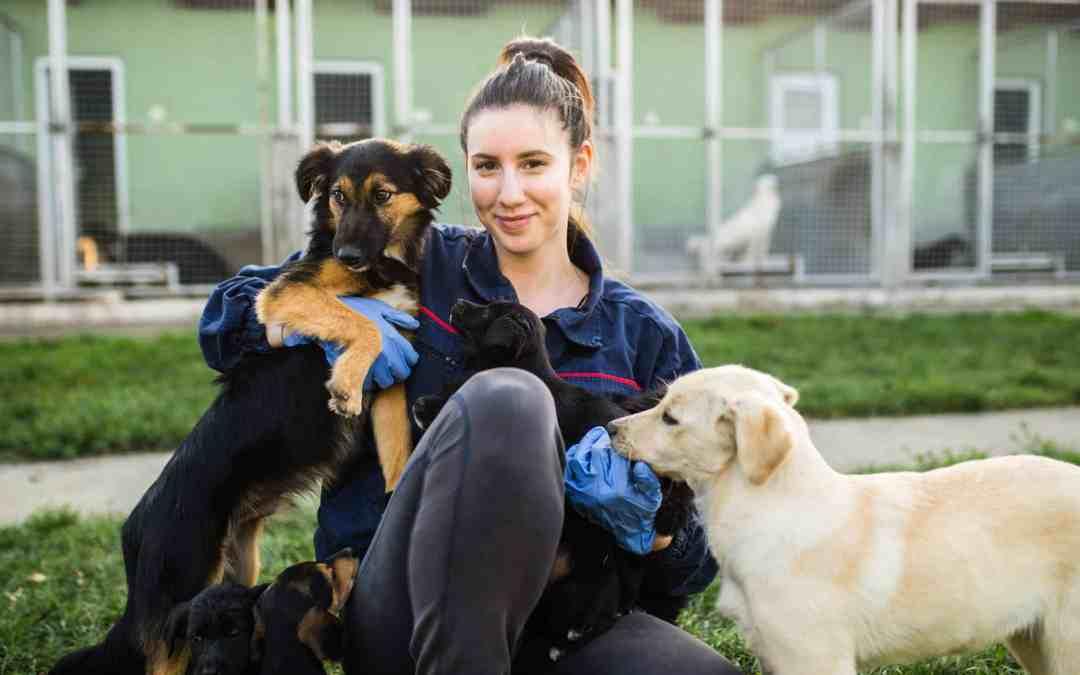 Tiere suchen ein Zuhause - weshalb man erst im Tierheim vorbeischauen sollte