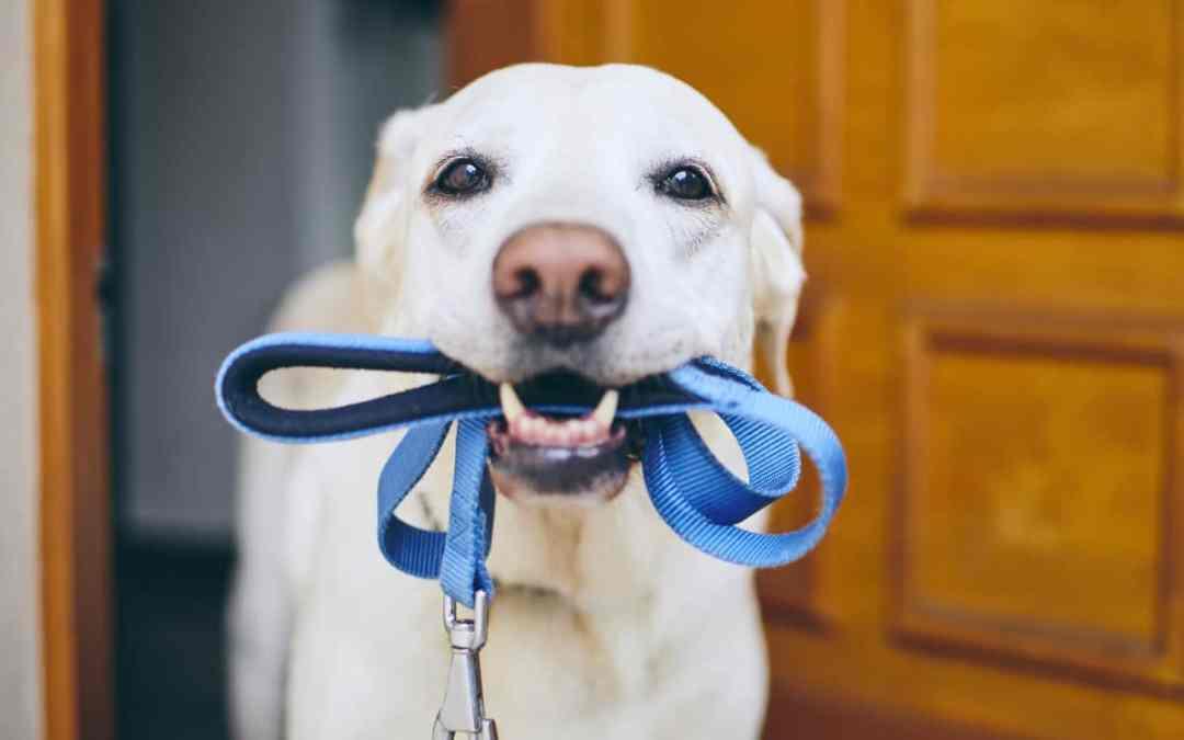 Tipps für die Auswahl der Hundeleine