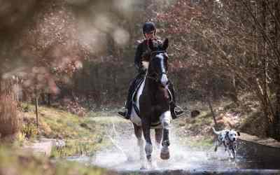 Sicher unterwegs mit Hund und Pferd