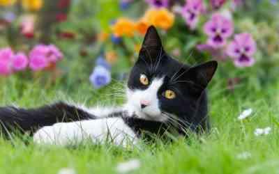 Klimaschutz: Ist Katzenhaltung umweltfreundlich?