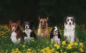 Diese Hunderassen sind nichts für Anfänger