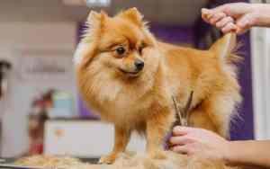 Was erwartet dich bei einem Hundefriseur?