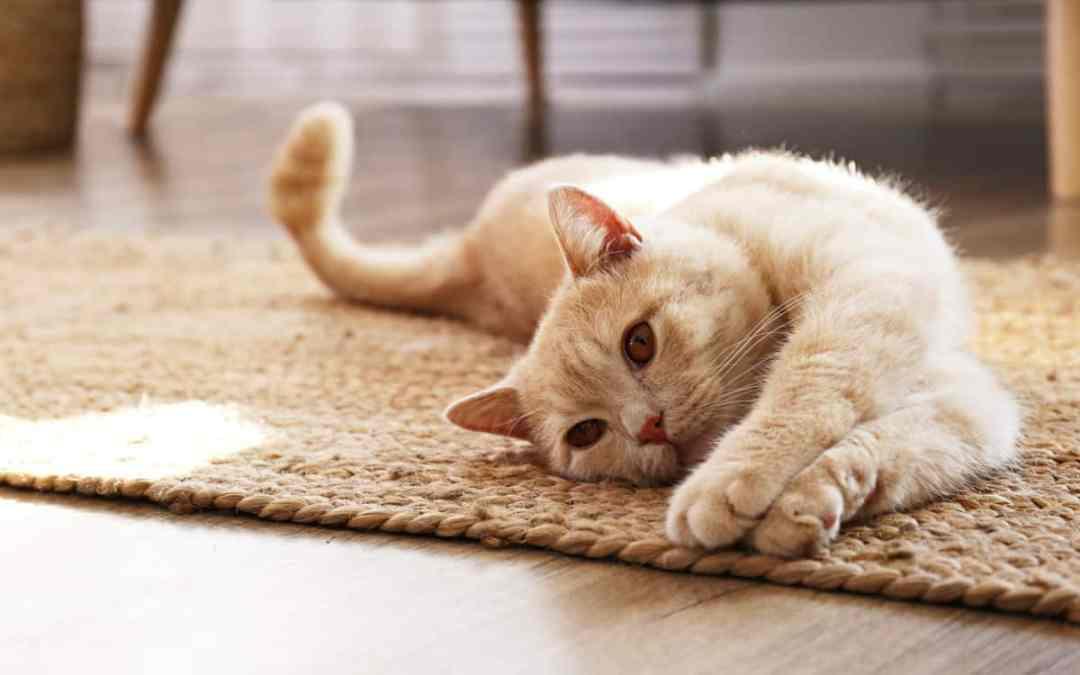 Wie kann ein Katzenpsychologe helfen?