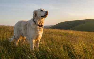 8 Merkmale, ob dein Hund sich wohl fühlt