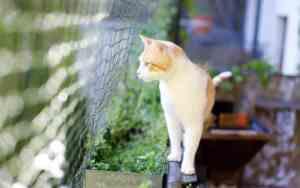 Kleine Freiheit für Katzen mit Katzenbalkon und Balkonnetz