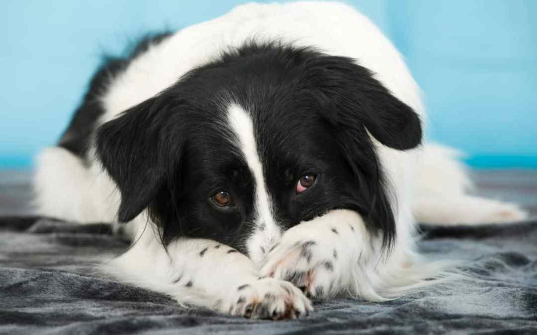 Was tun, wenn der Hund Blähungen hat?