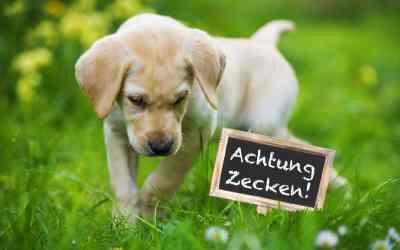 Natürlicher Zeckenschutz für Hunde