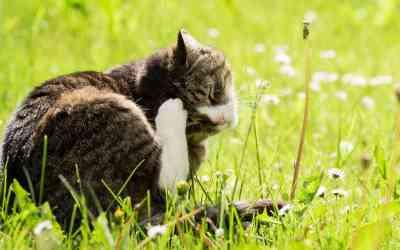 Natürlicher Zeckenschutz für Katzen