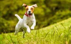 Wie wirkt Grünlippmuschel bei Hunden?