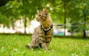Katze anleinen – sinnvoll oder nicht?