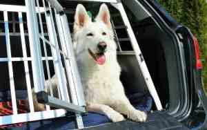 So klappt Autofahren mit dem Hund