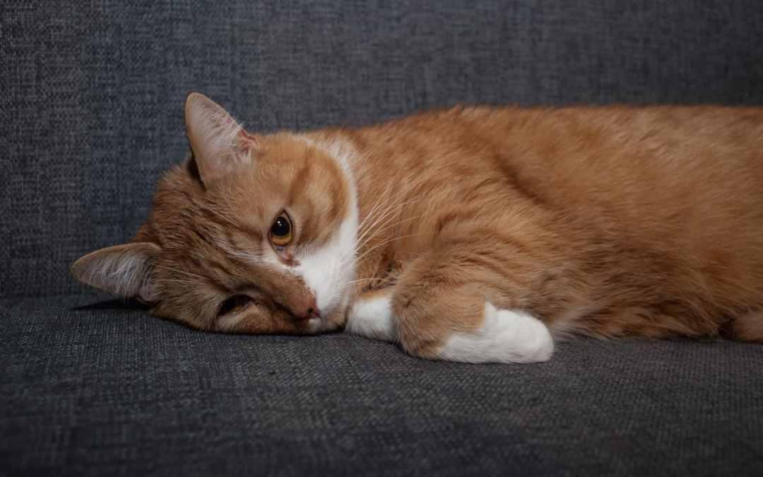 Wenn die Katze Durchfall hat