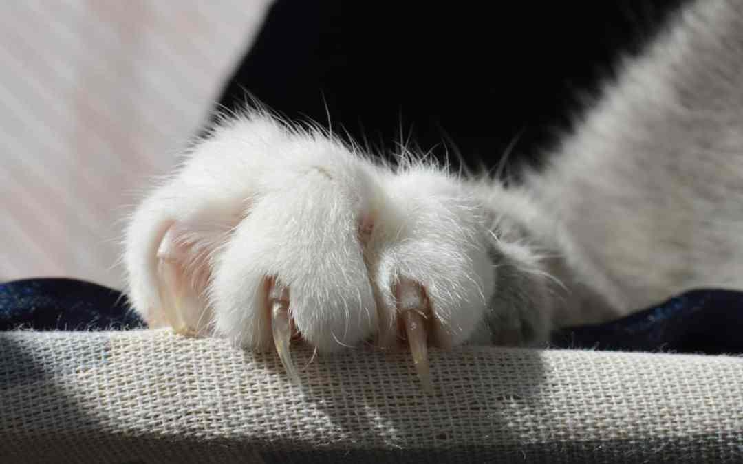 Brauchen Katzen Krallenpflege?