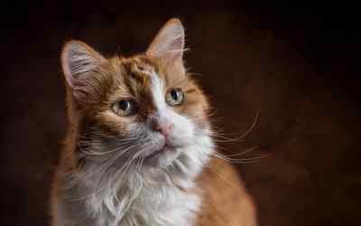 Adoption einer älteren Katze