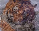 Годината на Тигъра: Най-големите предизвикателства пред зодите през 2022 година